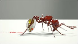 keller_entomologyAnim