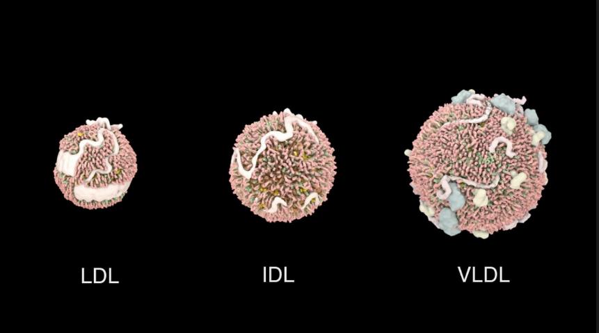 Sample 3: Low density lipoproteins