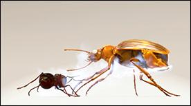 keller_entomologyAnim02