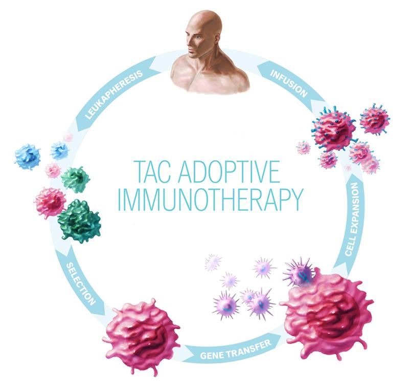 Adoptive Immunotherapy.