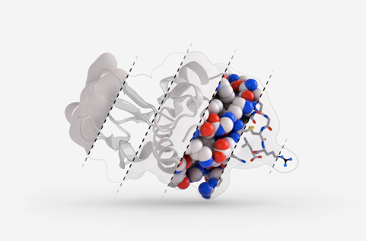 Protein Lysozyme